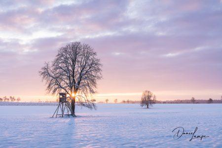 Deutschland, Odenwald, Wagenschwend, Winter, Schnee, Baum, Kastanien, Sonnenaufgang