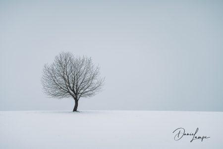 Deutschland, Hessen, Oberzent, Winter, Schnee, Baum
