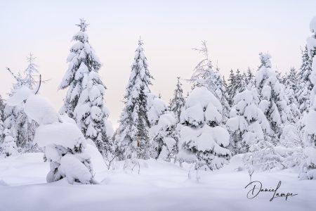 Deutschland, Odenwald, Waldbrunn, Winter, Schnee, Nadelwald, Tannen